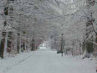 snowstreet.jpg